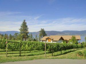 葡萄畑とワイナリー